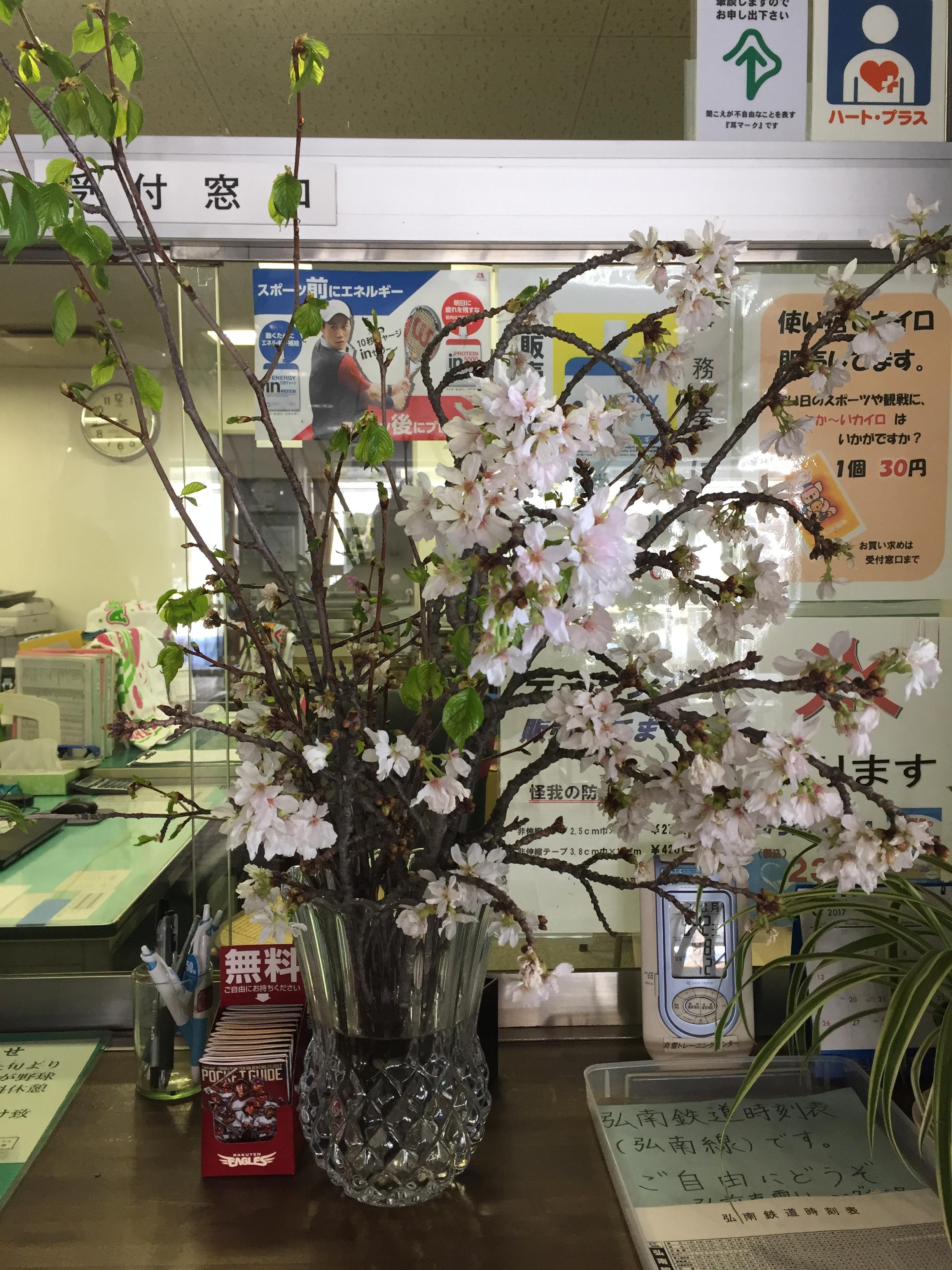 桜のせん定枝無料配布