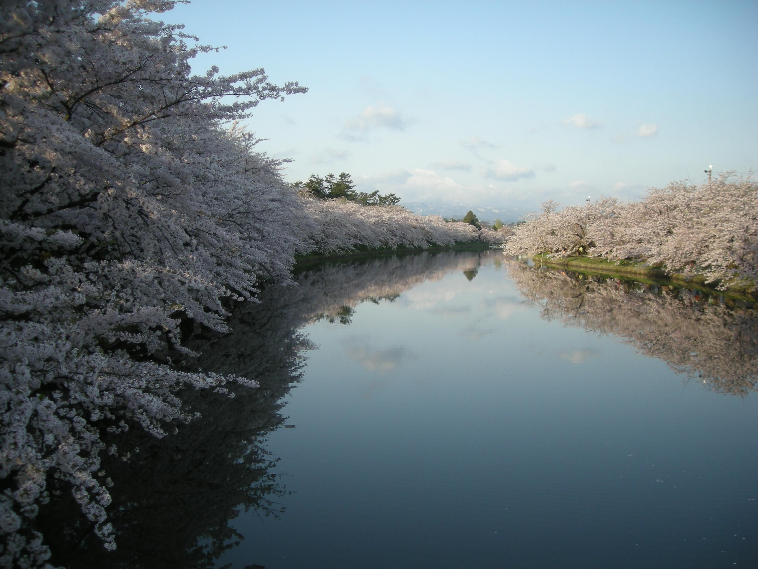 弘前桜まつり早朝ノルディックウォーキング