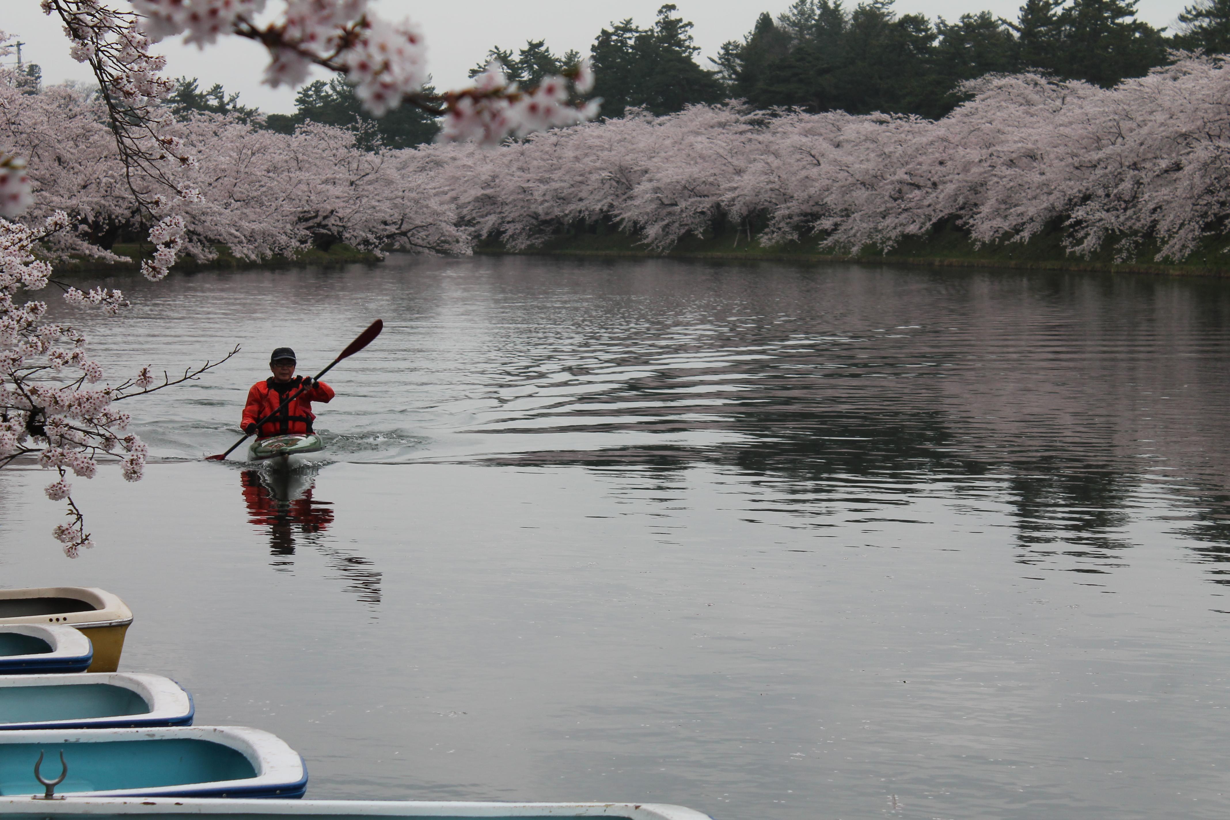 弘前さくらまつり2018 お花見カヌー体験