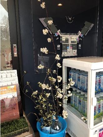 桜のせん定枝差し上げます